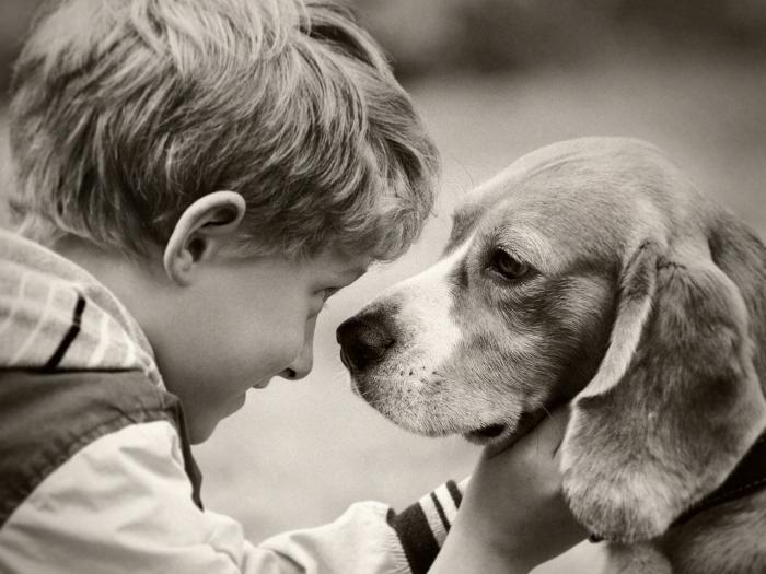 Perro y niño mirándose frente a frente, el niño tiene agarrada la cabeza del perro con suavidad.