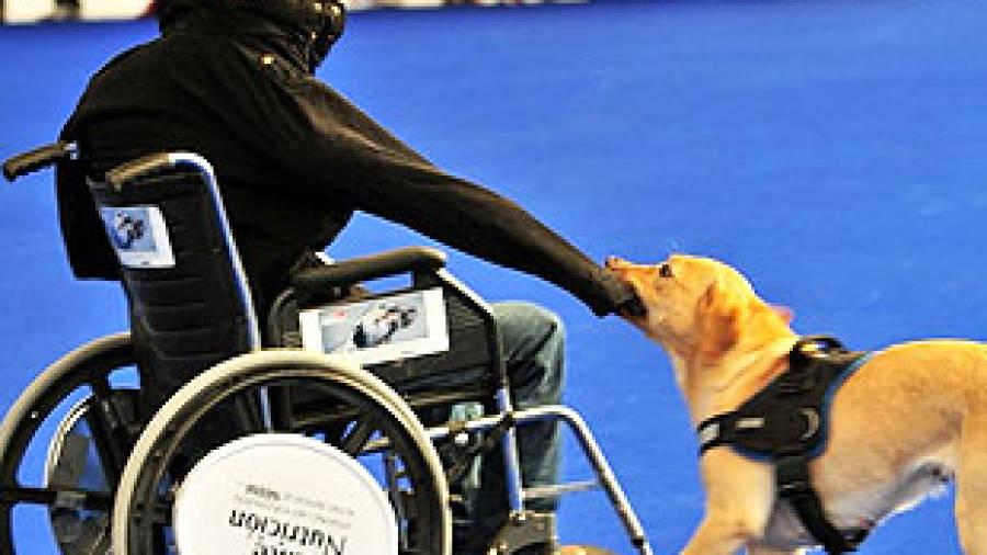 Una persona en silla de ruedas con un abrigo puesto y el perro de asistencia le esta tirando de la manga del abrigo para quitársela