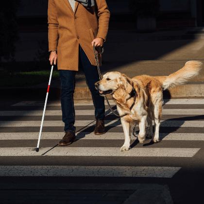 Persona con un bastón cruzando la calle y su perro guía a su lado con una correa larga